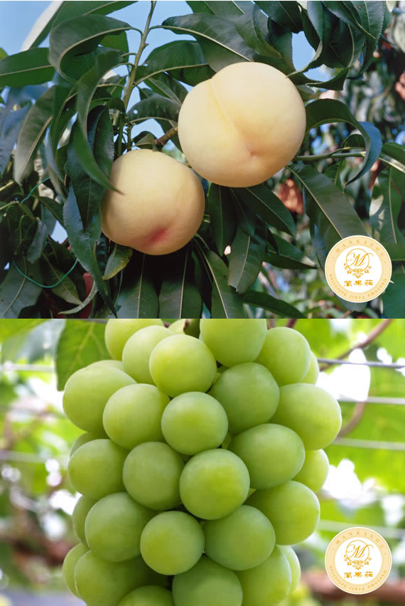 清水白桃&マスカットの詰合せ 贈答品にもピッタリな特選高級果物です。