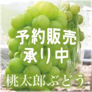 岡山県産の桃太郎ぶどう