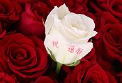 還暦祝いに贈る60本のバラの花束