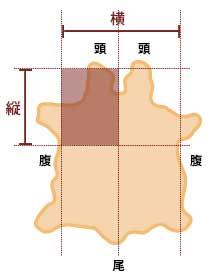 革の大きさと寸法の目安